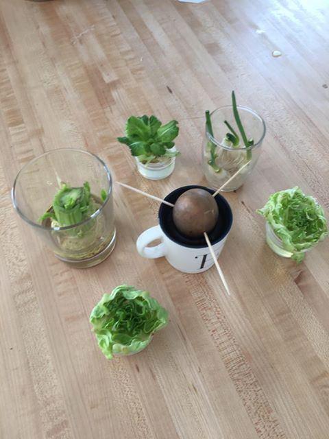 Repousse des légumes